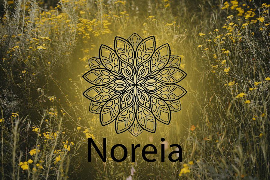 Noreia Essenzen